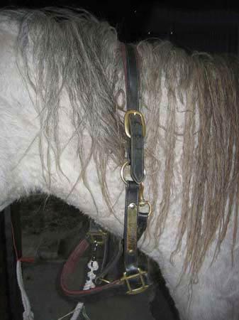 Foam Around Horse's Mouth