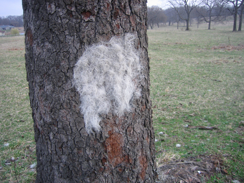 horse_tree_bark