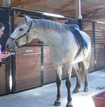 Easy Horse Birthday Cake Recipe and Photo