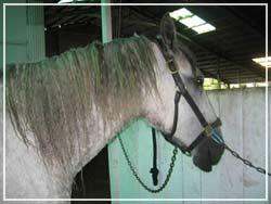 Braiding a Horse Mane to Make it Grow Longer